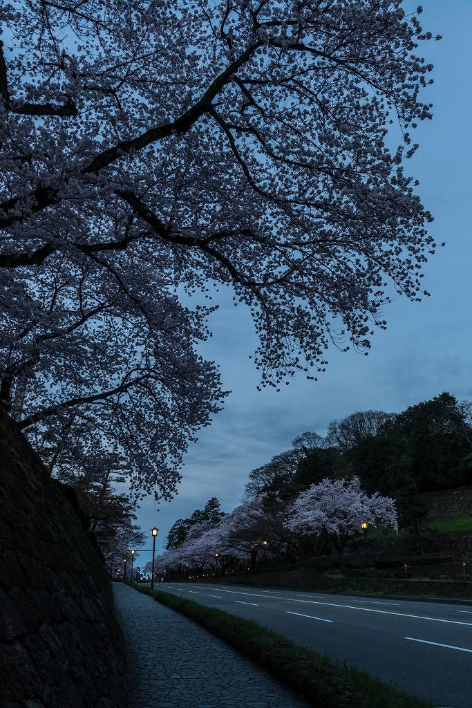 2017.04.10夜明けの金沢城9