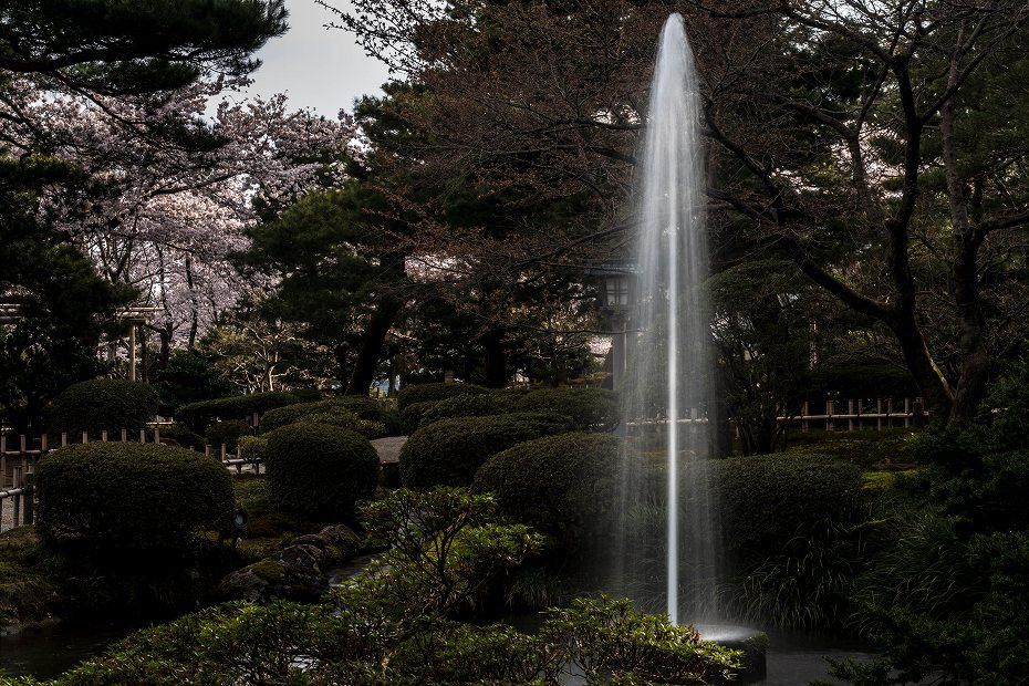2017.04.10兼六園の桜咲く朝景5