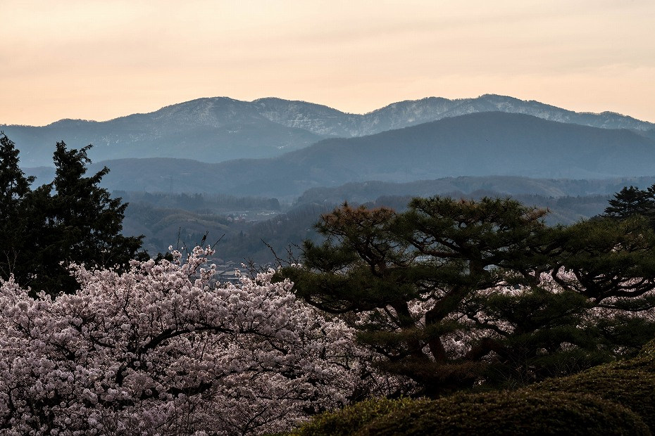2017.04.10兼六園の桜咲く朝景1