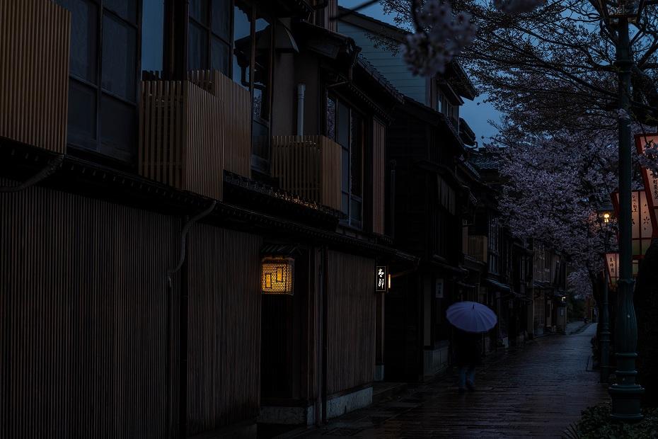 2017.04.11主計町の夕桜5