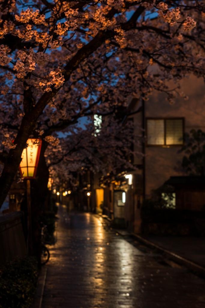 2017.04.11主計町の夕桜3