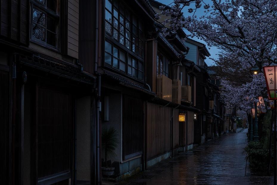 2017.04.11主計町の夕桜4