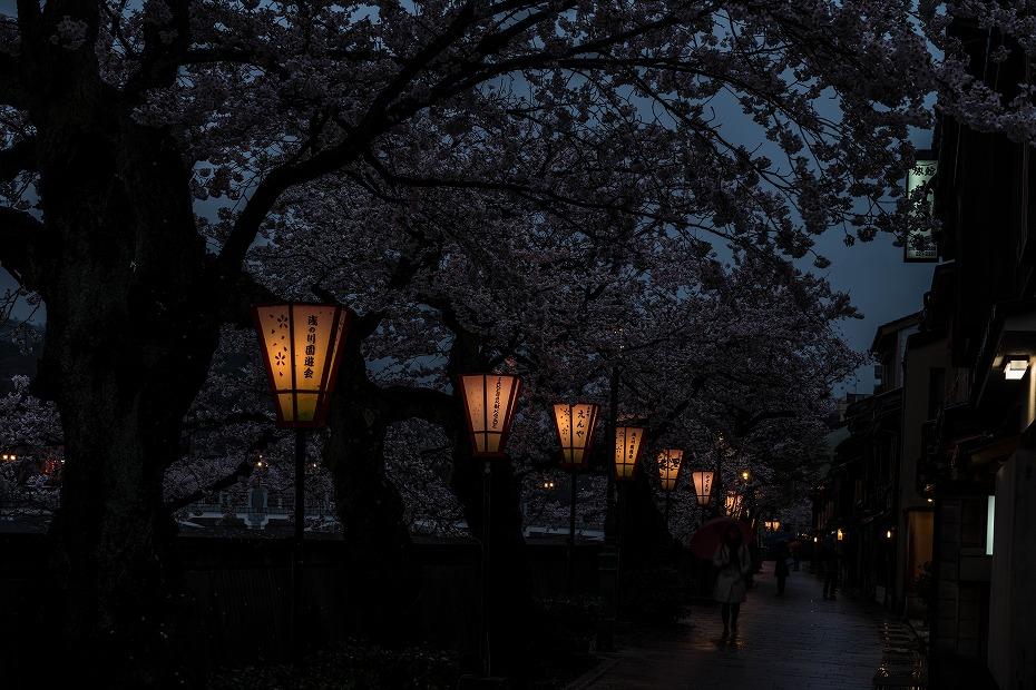 2017.04.11主計町の夕桜2