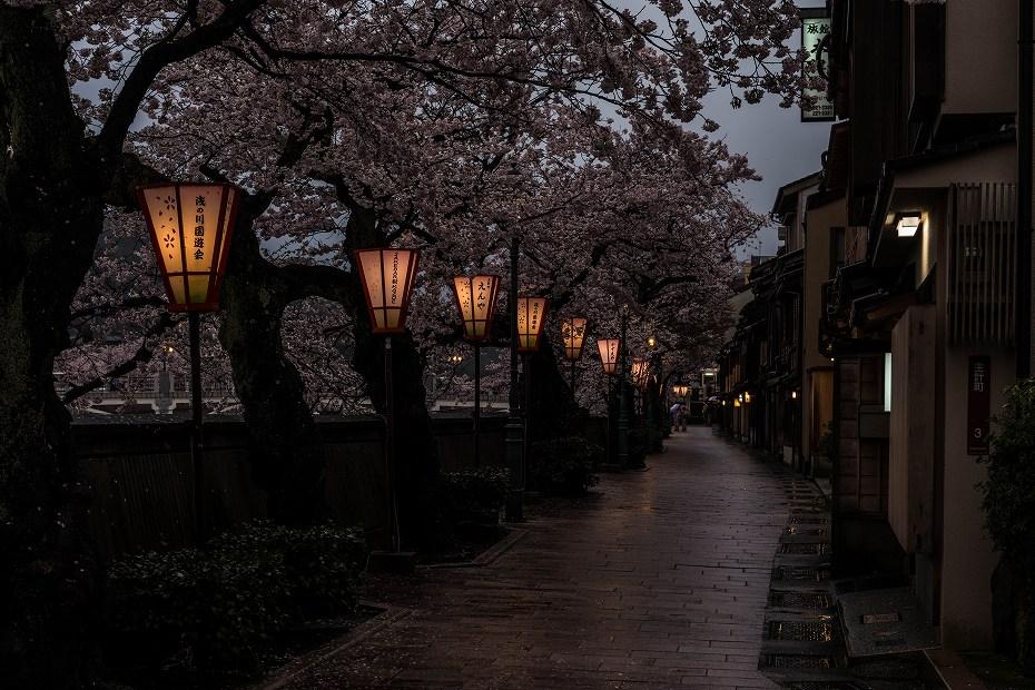 2017.04.11主計町の夕桜1