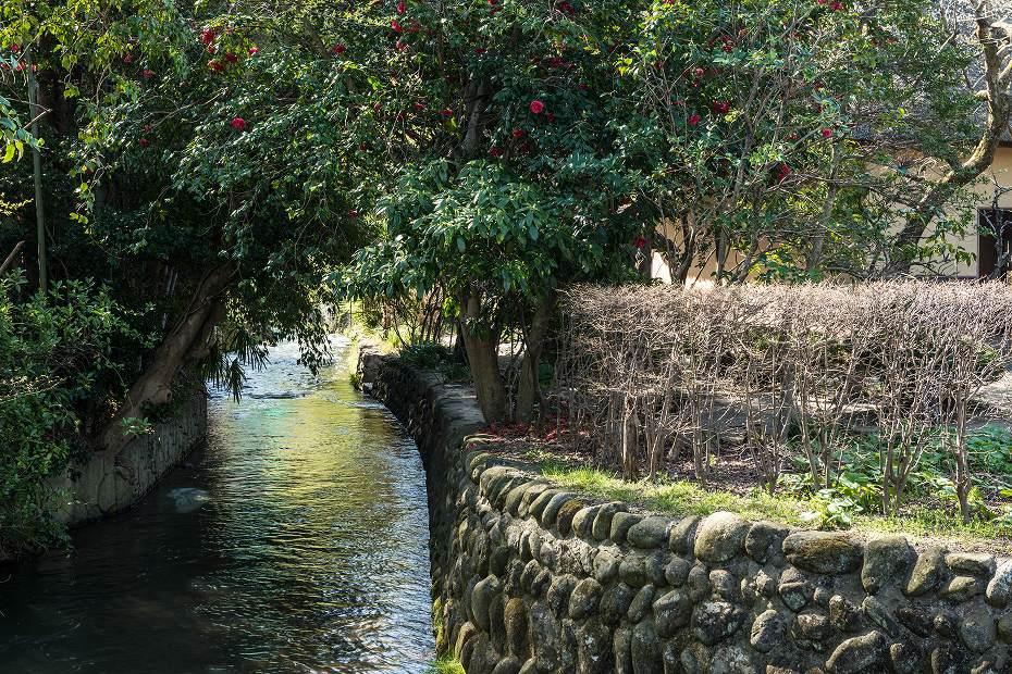 2017.04.14白石城の桜10