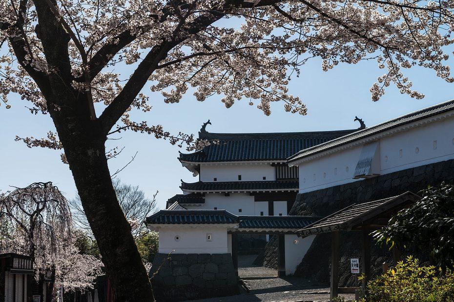 2017.04.14白石城の桜8