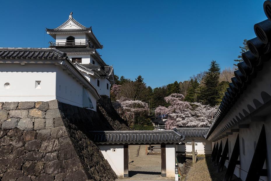 2017.04.14白石城の桜9