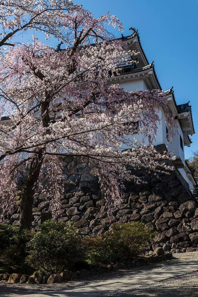 2017.04.14白石城の桜7