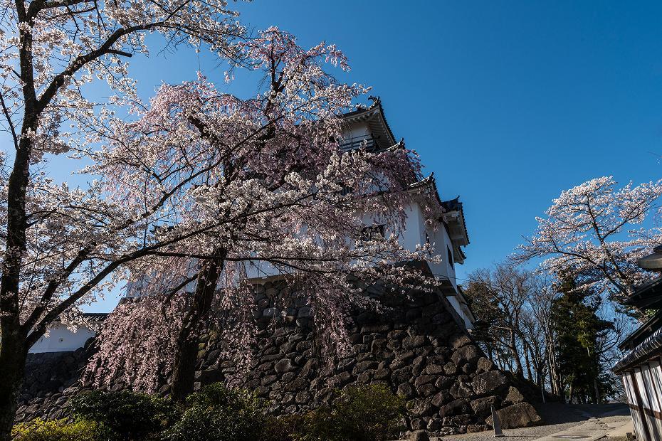 2017.04.14白石城の桜6