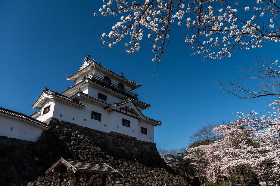 2017.04.14白石城の桜3