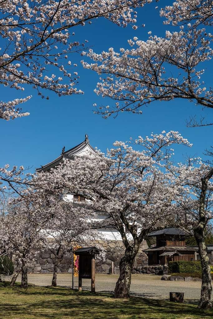 2017.04.14白石城の桜2