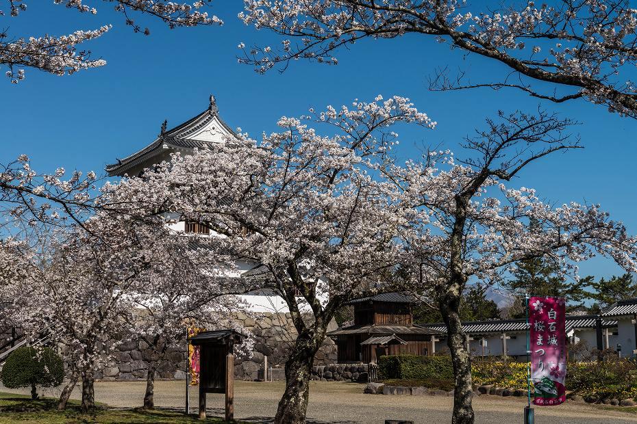 2017.04.14白石城の桜1