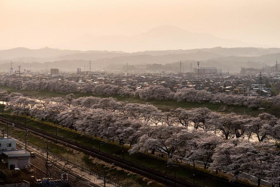 2017.04.14一目千本桜を散策12