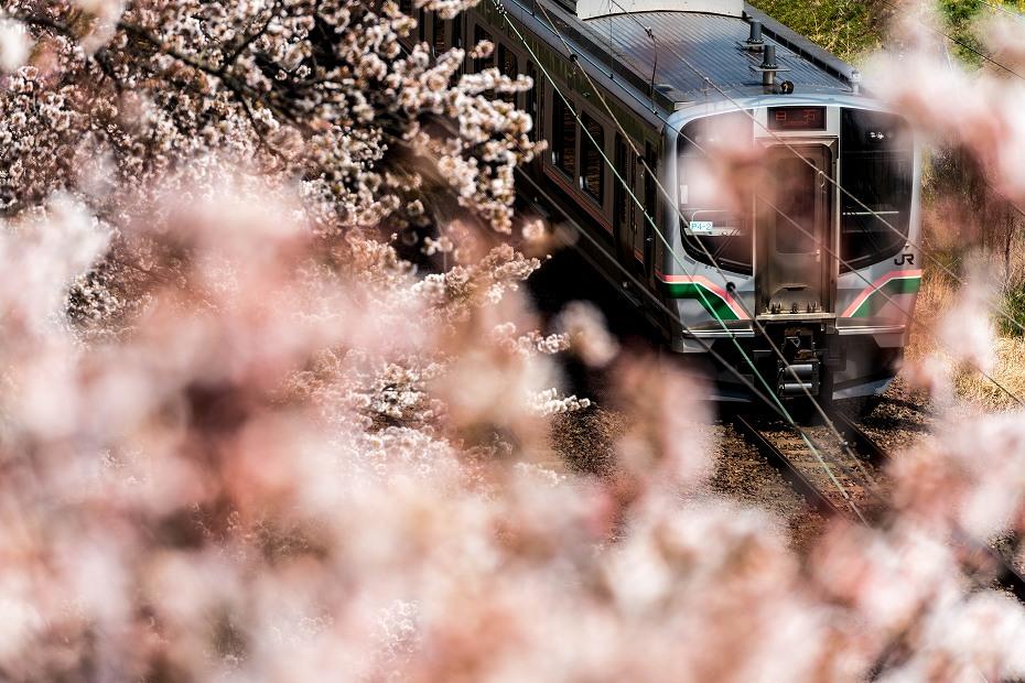 2017.04.14一目千本桜を散策10