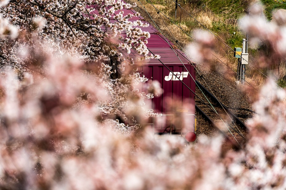2017.04.14一目千本桜を散策11