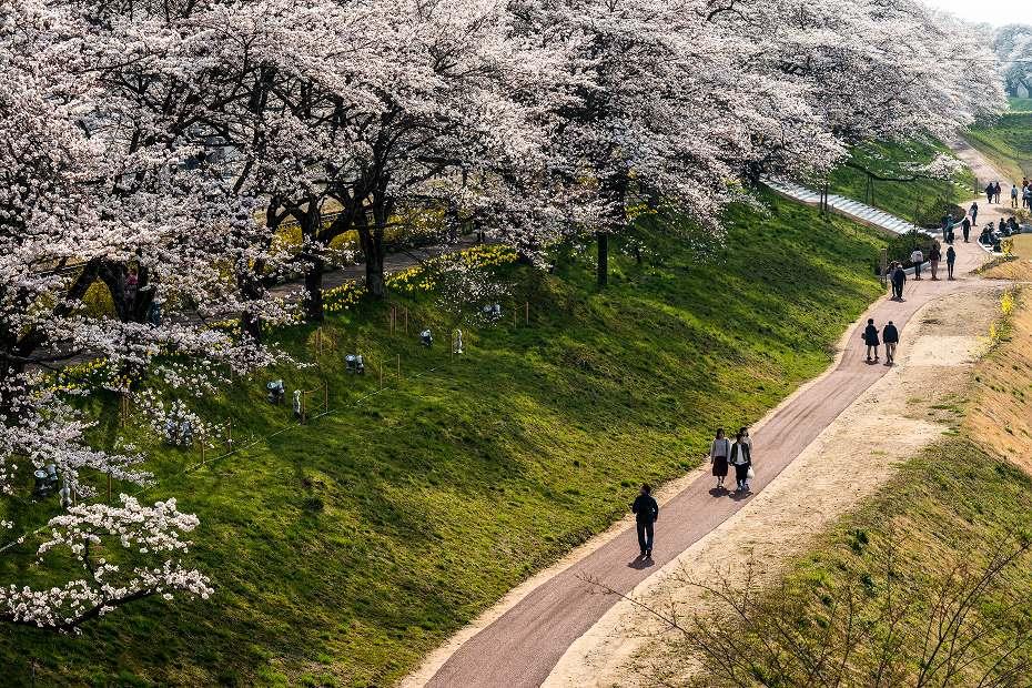 2017.04.14一目千本桜を散策2