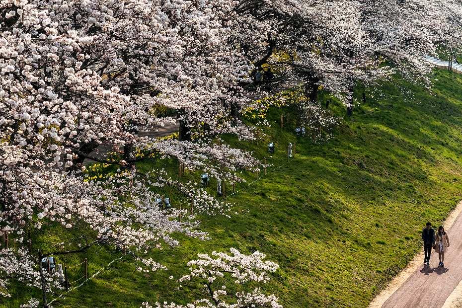 2017.04.14一目千本桜を散策3