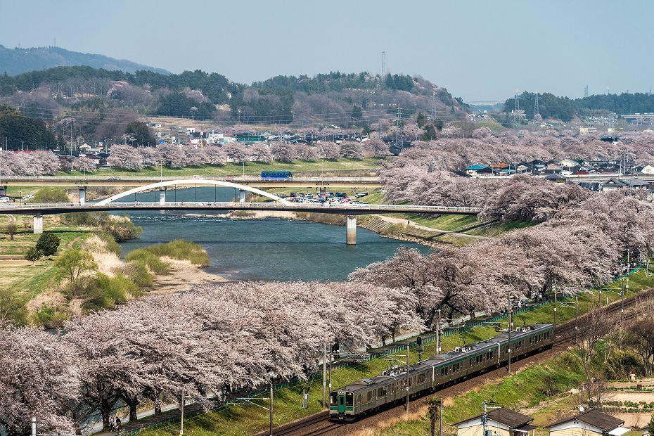 2017.04.14一目千本桜を散策1