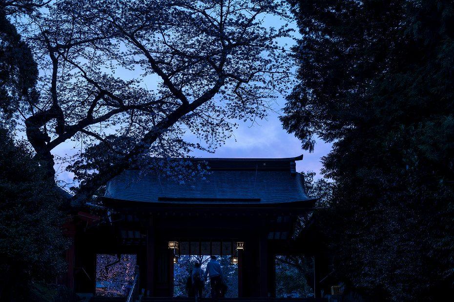 2017.04.15塩釜神社神々の花灯り1