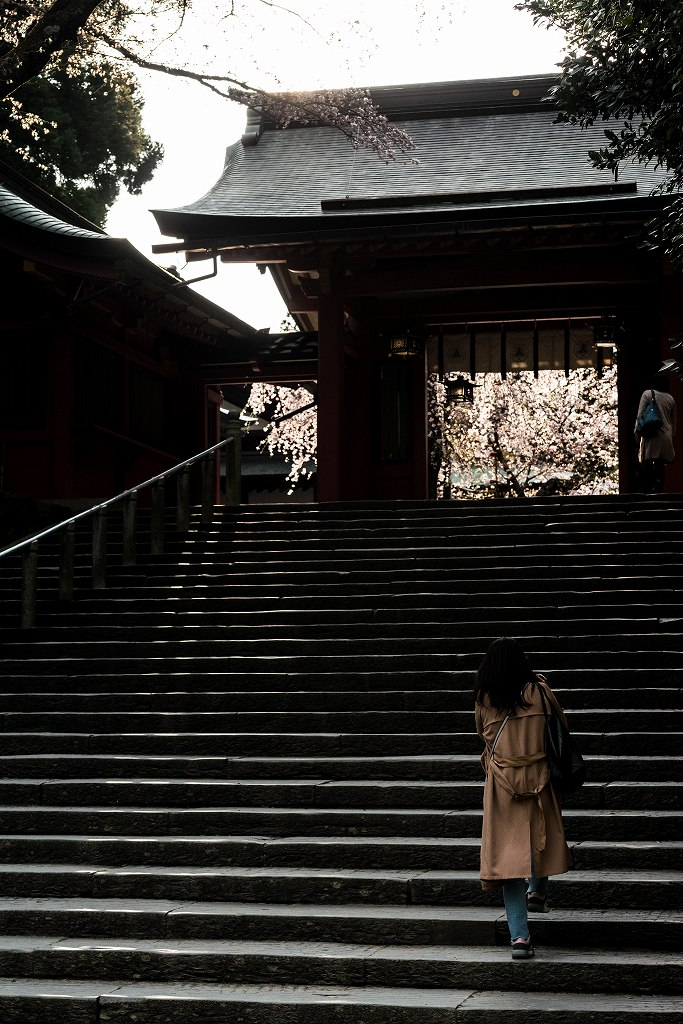 2017.04.15塩竃神社の桜景色7