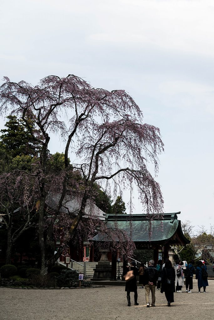 2017.04.15塩竃神社の桜景色5