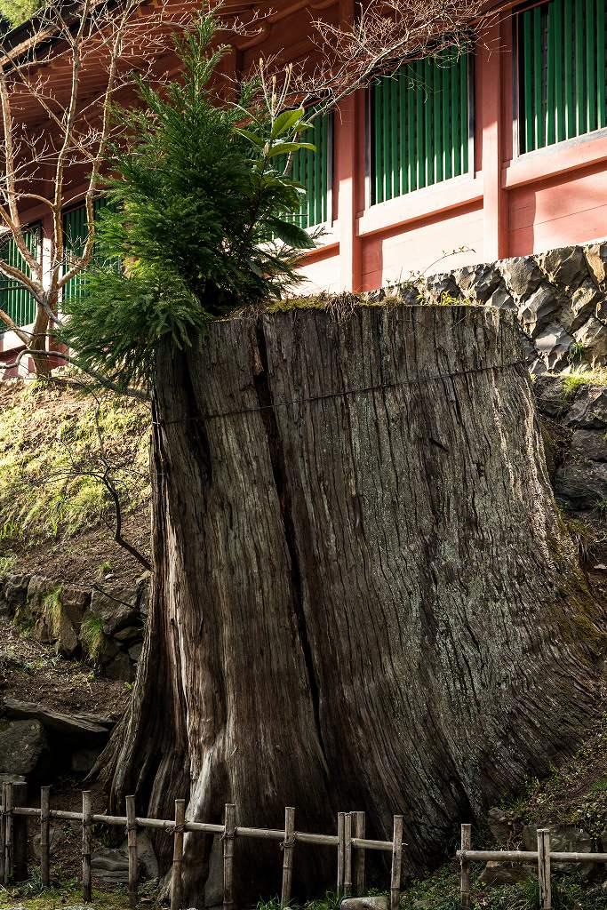 2017.04.15塩竃神社の桜景色4