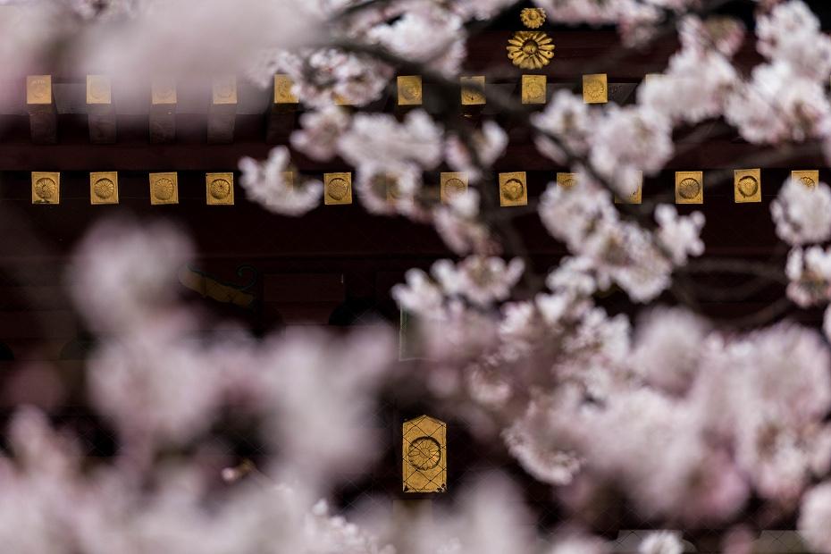 2017.04.15塩竃神社の桜景色2