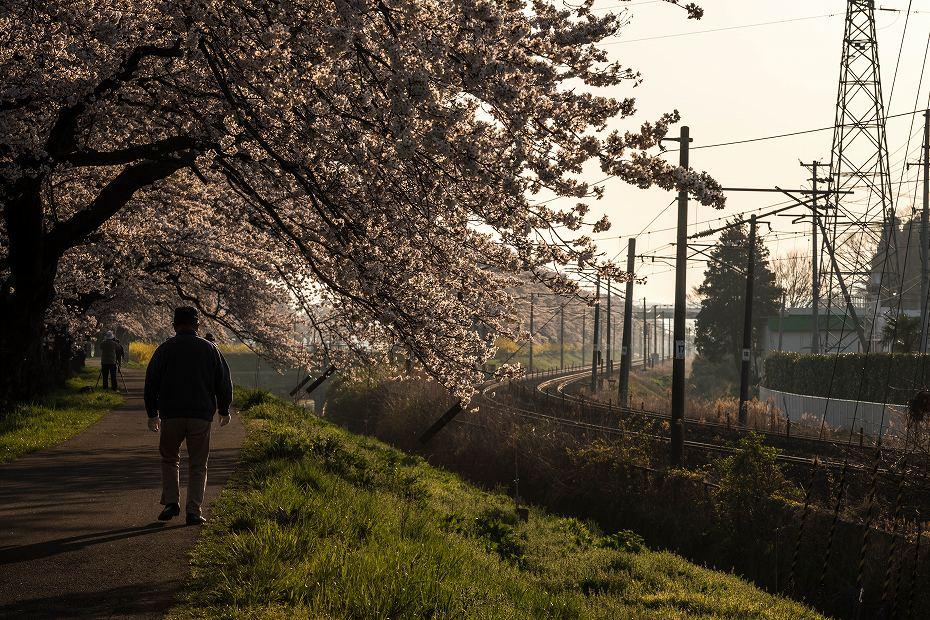 2017.04.16一目千本桜の朝景5