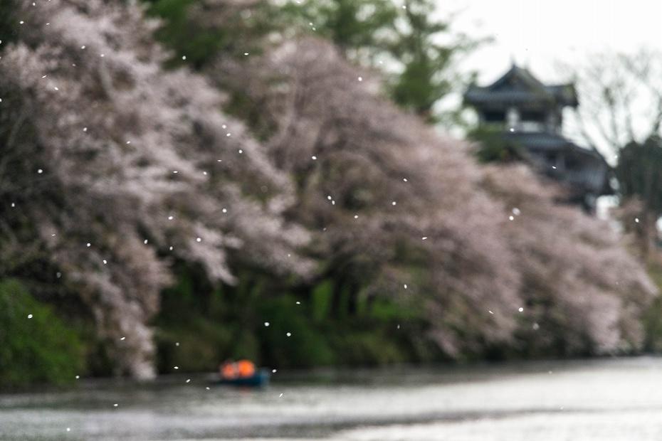 2017.04.17高田公園の花筏18
