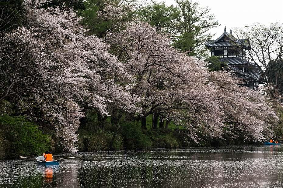 2017.04.17高田公園の花筏17