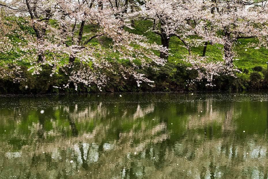 2017.04.17高田公園の花筏16