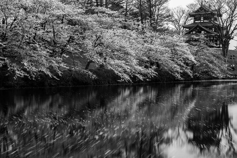 2017.04.17高田公園の花筏15