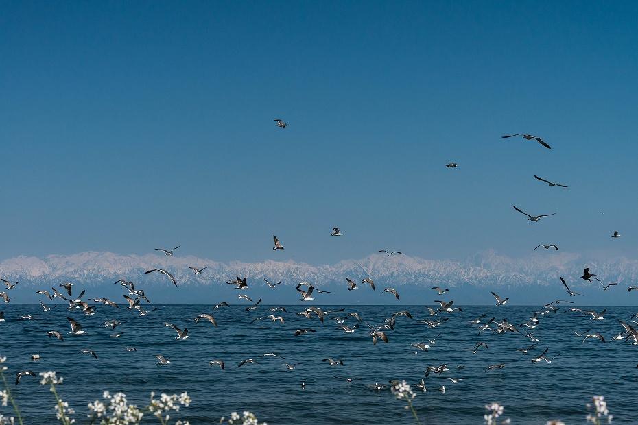 2017.04.24海越えの北アルプス10