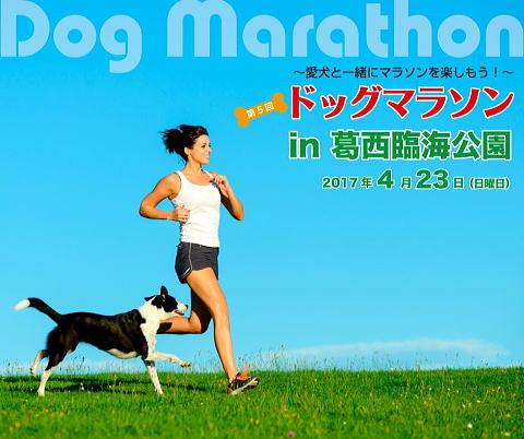 ドッグマラソン3