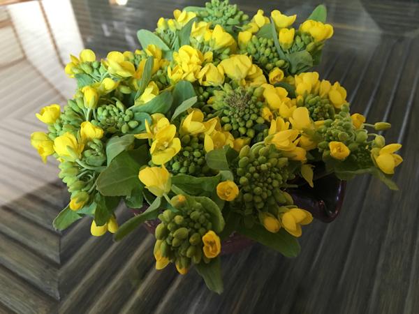 01菜の花