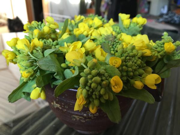 02菜の花