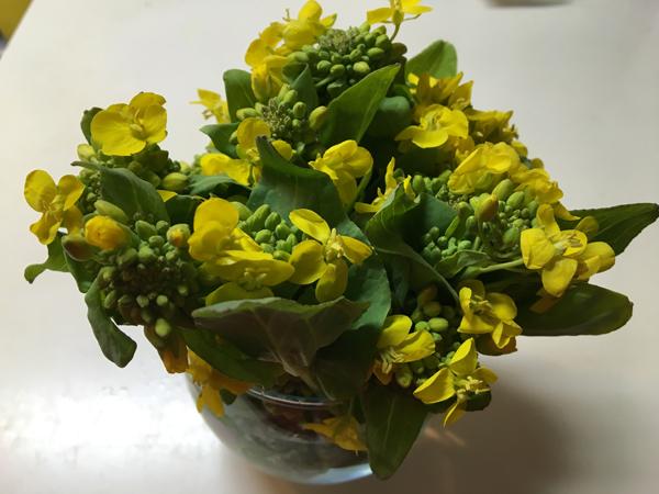 ☆05菜の花 のコピー