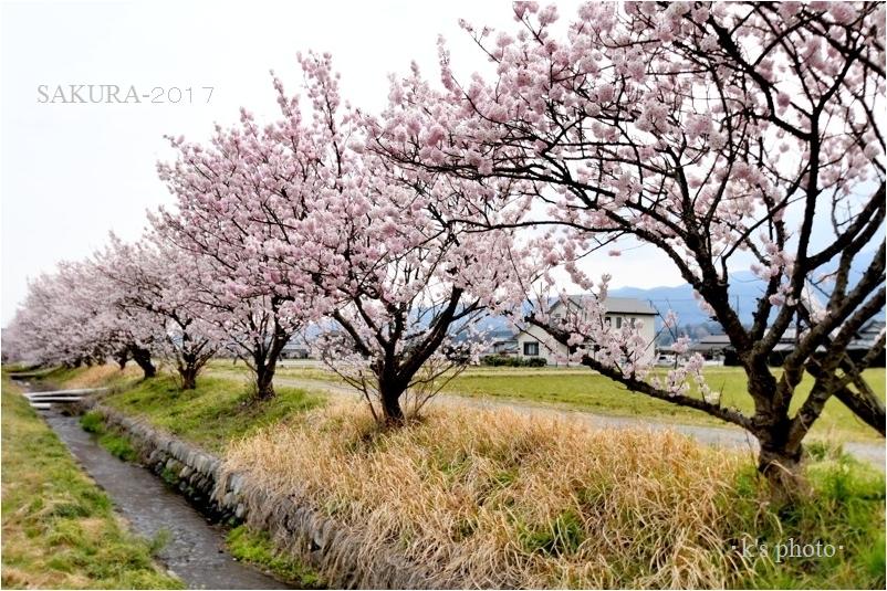 20170331fukuzawa009.jpg