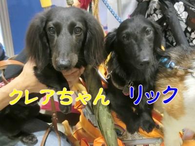 201704リック・クレアちゃん