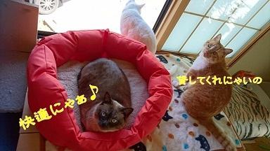 201704快適にゃぁ