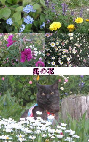春の花と猫
