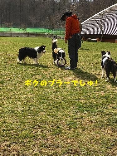 s-IMG_9391_1.jpg