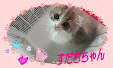 image1sda.jpg