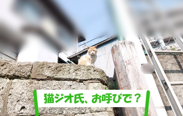 「猫ジオ氏、お呼びで?」