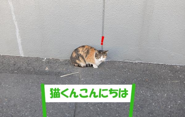 「猫くんこんにちは」