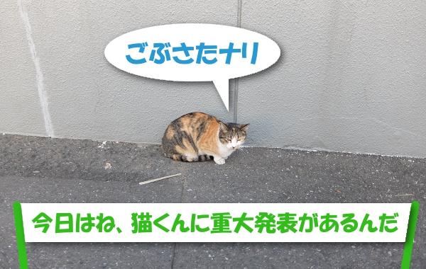 ごぶさたナリ 「今日はね、猫くんに重大発表があるんだ」