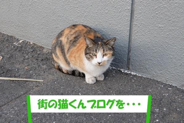 「街の猫くんブログを・・・」