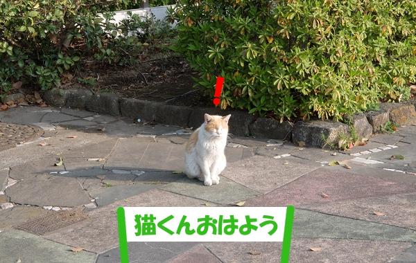猫くんおはよう