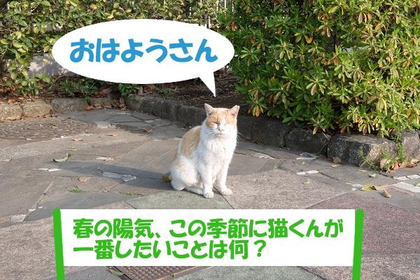 おはようさん  「春の陽気、この季節猫くんが一番したいことは何?」