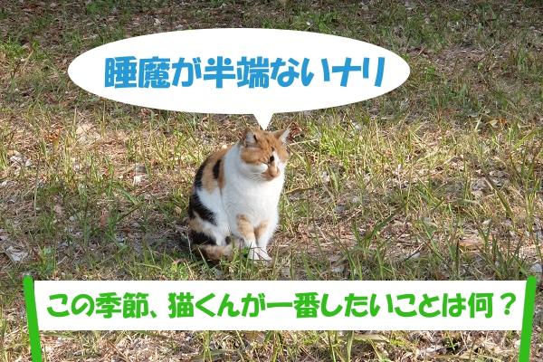 睡魔が半端ないナリ  「この季節、猫くんが一番したいことは何?」